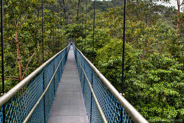 Bukit Timah Tree Top Walk