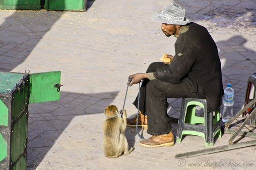 Monkey Handler in Marrakech Morocco