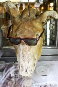 Calf Head with Sunglasses and Earring in Madrid