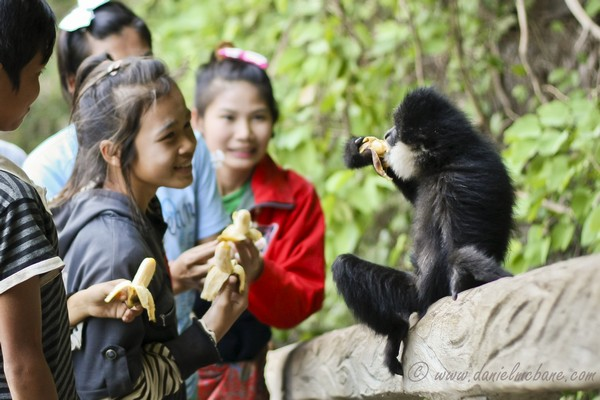 Kids Feeding Monkey Laos