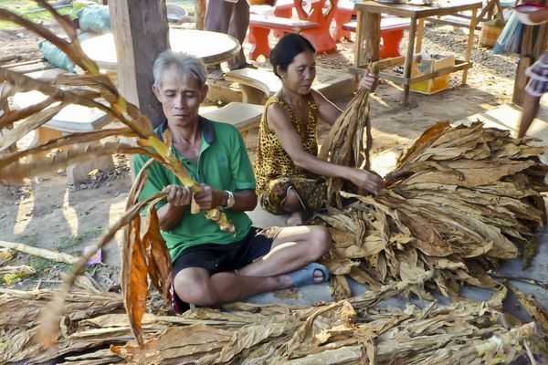 Tobacco Farmers Laos