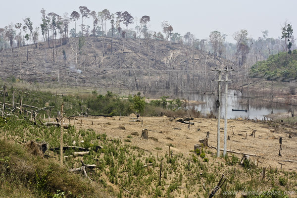 Central Laos Slash And Burn