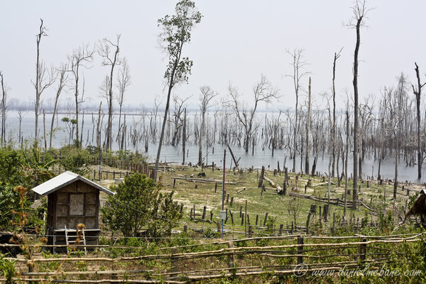 Dead Trees in Lake Laos