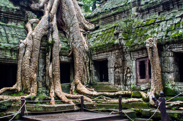 Angkor Temple With Tree