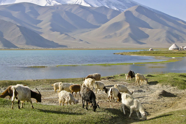 Goats Xinjiang China