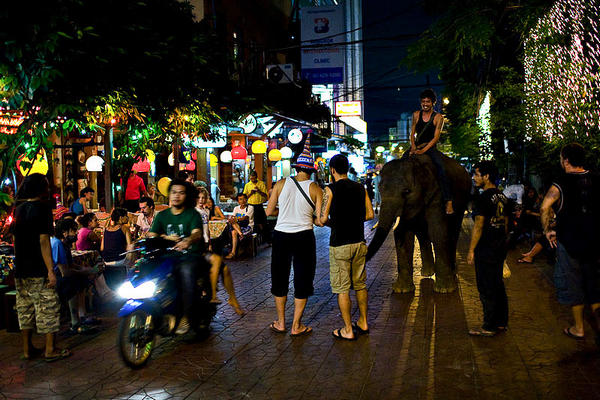 Elephant on the streets of Bangkok Thailand