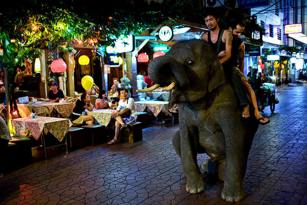 Elephant riding on street of Bangkok