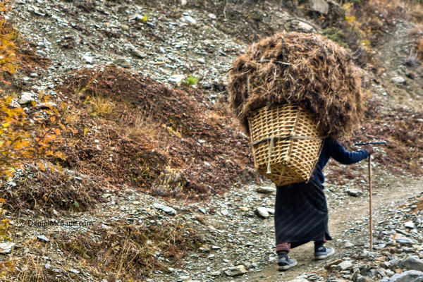 woman carrying heavy load on Annapurna Circuit