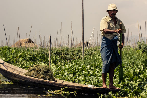 using weeds to make Inle Lake's floating gardens