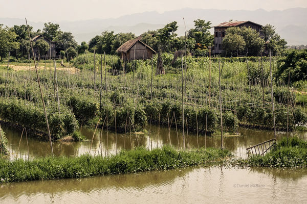 Inle lake's famous floating gardens