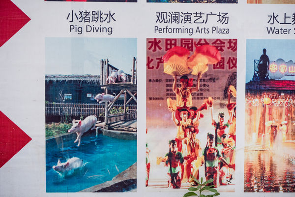 Funny amusement park sign in Shenzhen for pig diving
