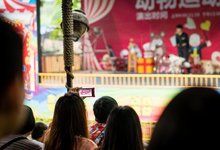 Audience member capturing dog show on phone in Shenzhen