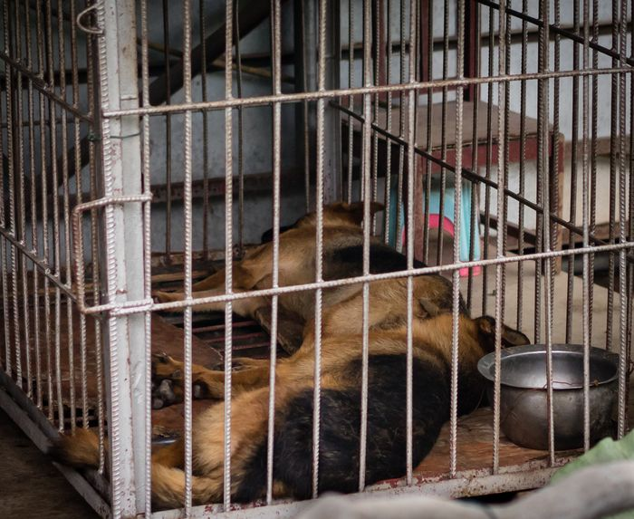 Shenzhen zoo has dogs in a cage