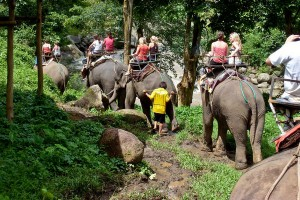 Elephant riding in Chiang Mai Thailand